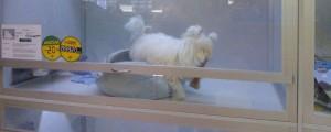 Eläinkaupoista löytää myös koiranpentuja